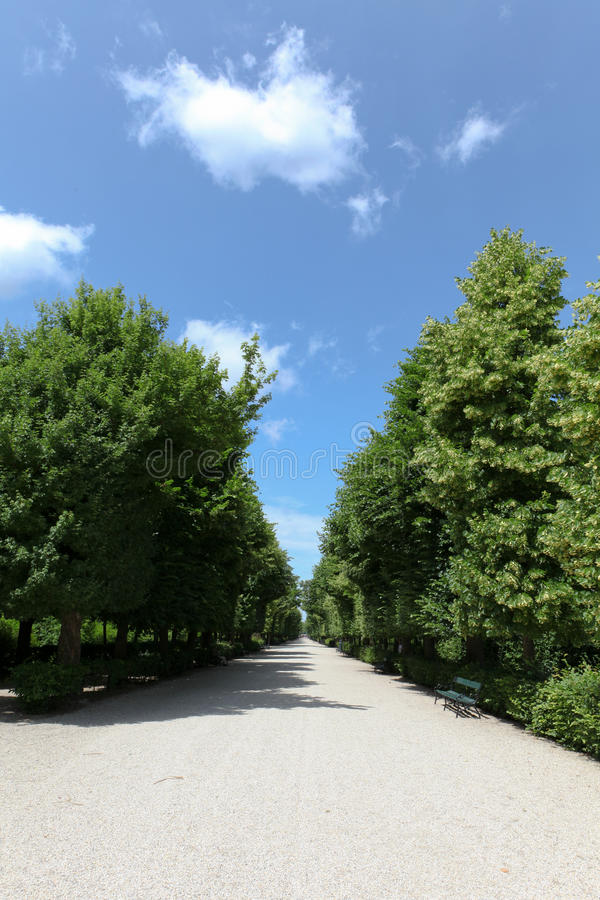 Download Long Footpath Between The Trees Stock Image - Image: 20114673