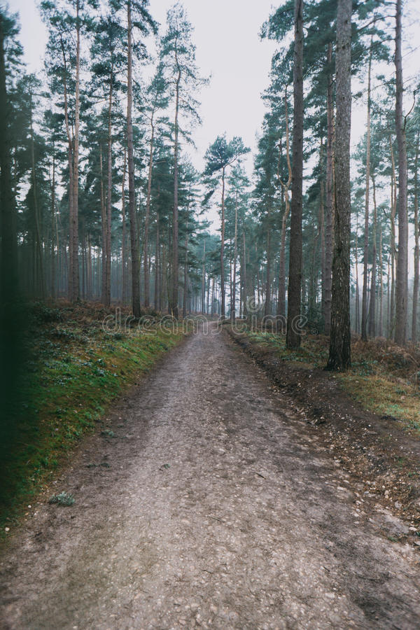 Long Forest Path. A long path leading thorugh a pine forest royalty free stock photography