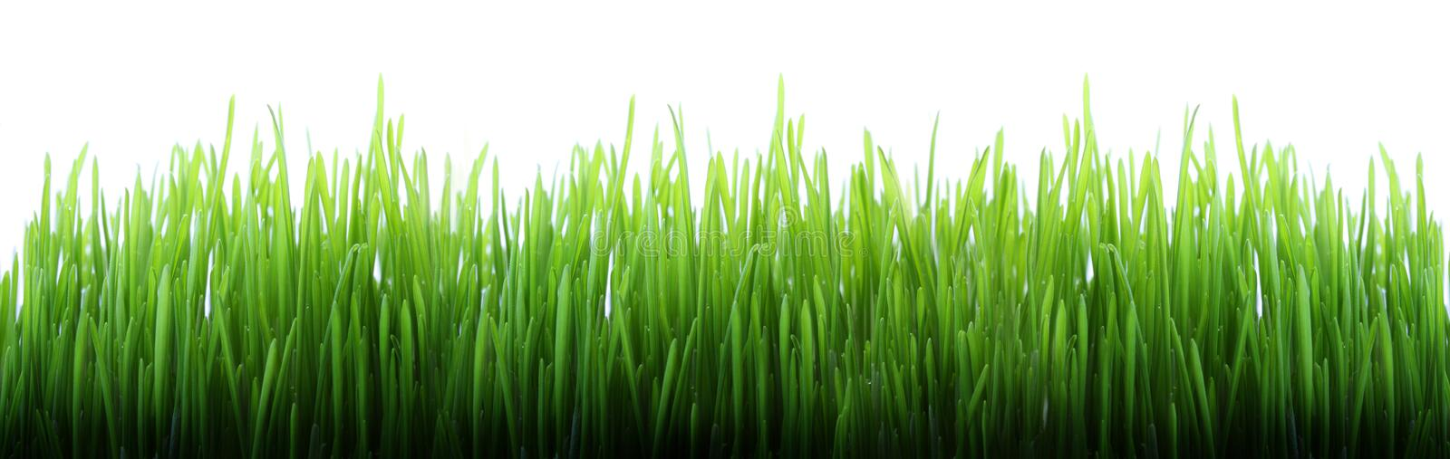 Download Long grass stock photo. Image of cheerful, calm, copy - 8259194