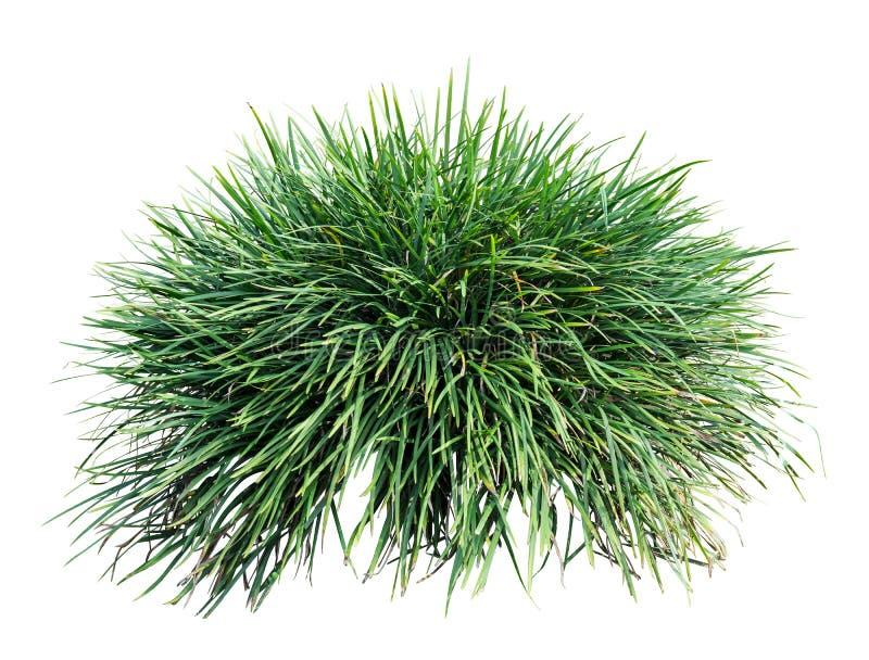 Long grass royalty free stock photo