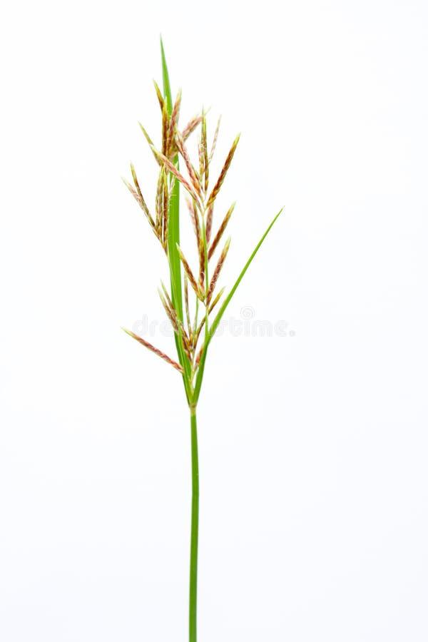 Long Grass Meadow Closeup Stock Photos