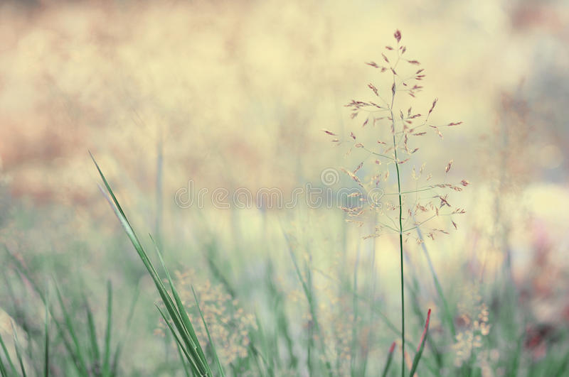 Long grass meadow. Closeup. Nature in details royalty free stock images