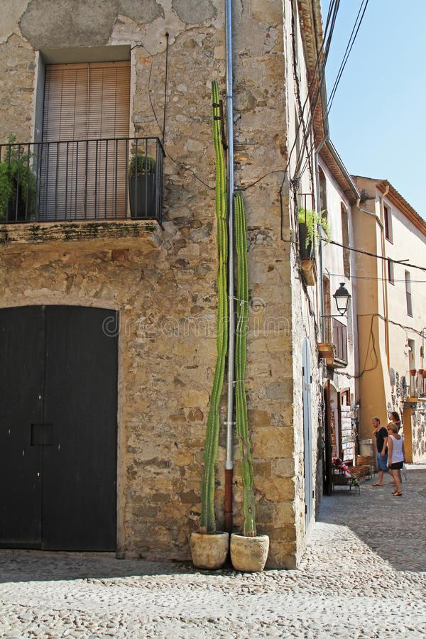 Long green cactus standing near the facade of the building in Besalu stock photos