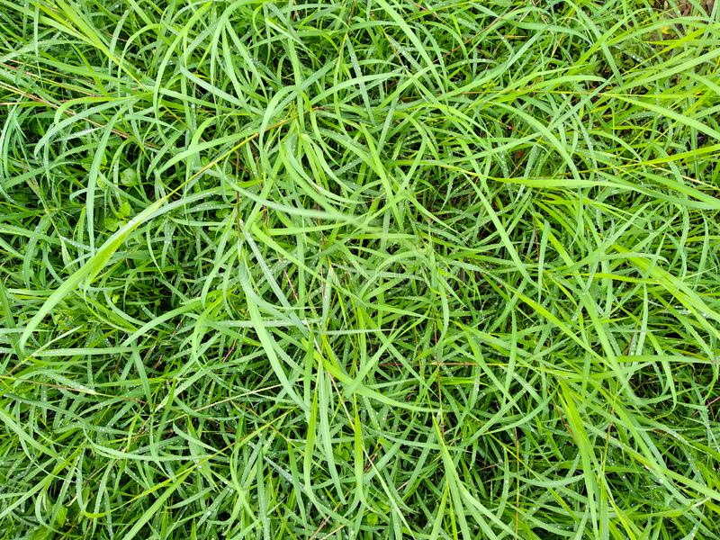 Long green grass background, green hairy grass texture stock images