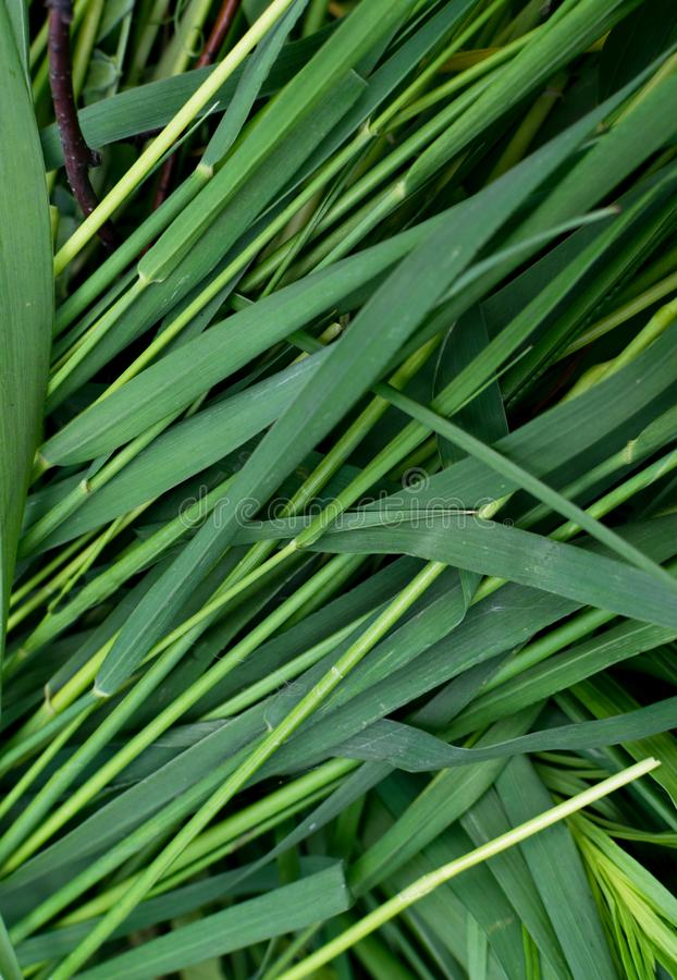 Long green grass striped background, natural leaves plant pattern or texture. Top view stock photos