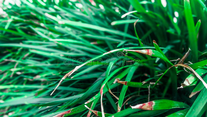 Long green leaves stock image