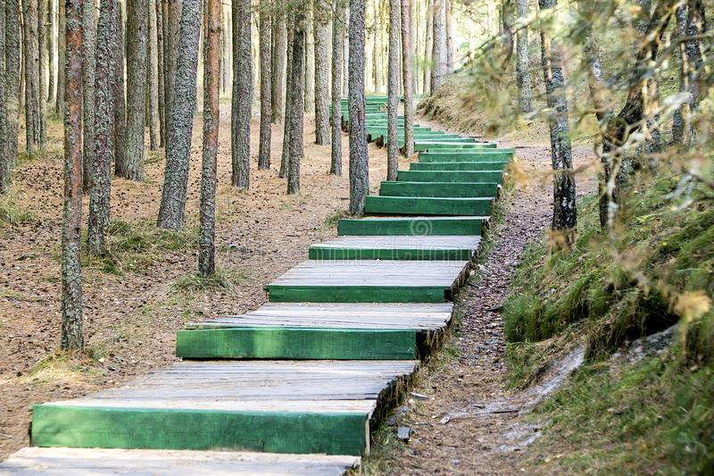 Long green wooden ladder in the wood as the road stock photography