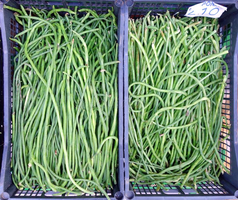 Long green beans stock image  Image of green, agriculture