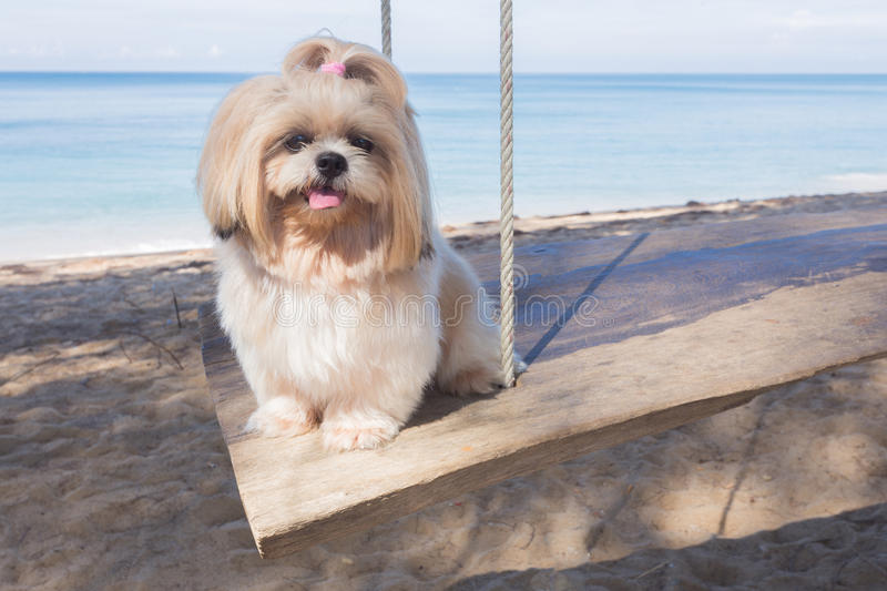 Long hair dog beach and sea royalty free stock images