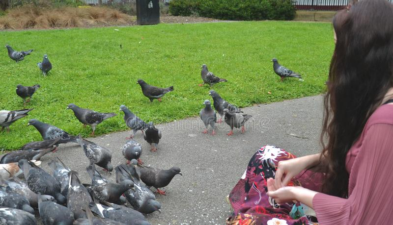 A lady sits feeding pigeons in a city park royalty free stock photography