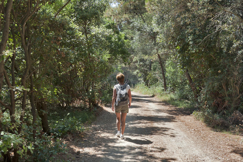 Download Long hike in forest stock photo. Image of backpack, istria - 23899914