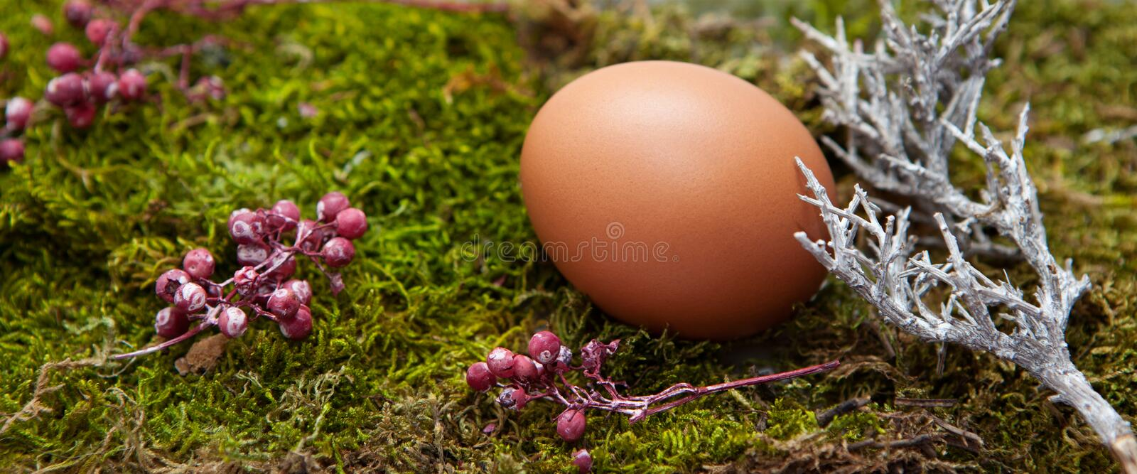 Long horizontal photo of Easter decoration: A natural egg on moss. royalty free stock images