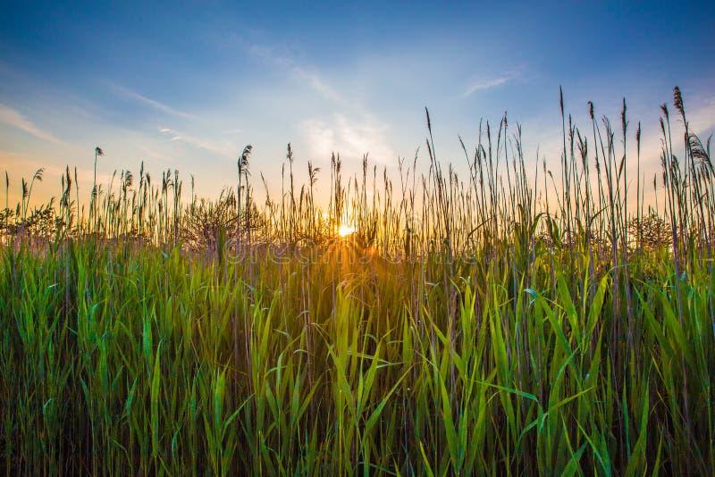 Long Island högväxt gräs arkivfoton