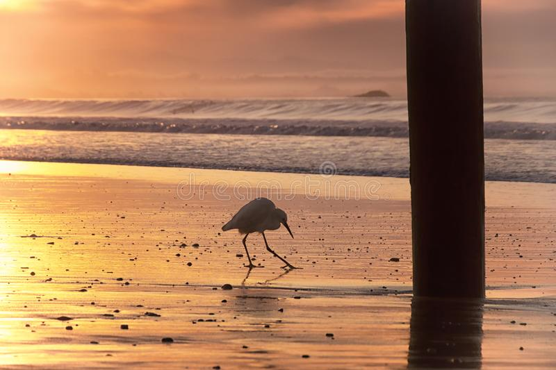 A walk on the Beach royalty free stock photography