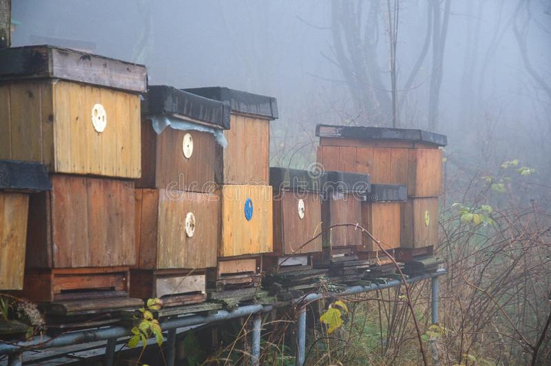 Bee hives. A long line of wood bee hives at the beginning of autumn royalty free stock images