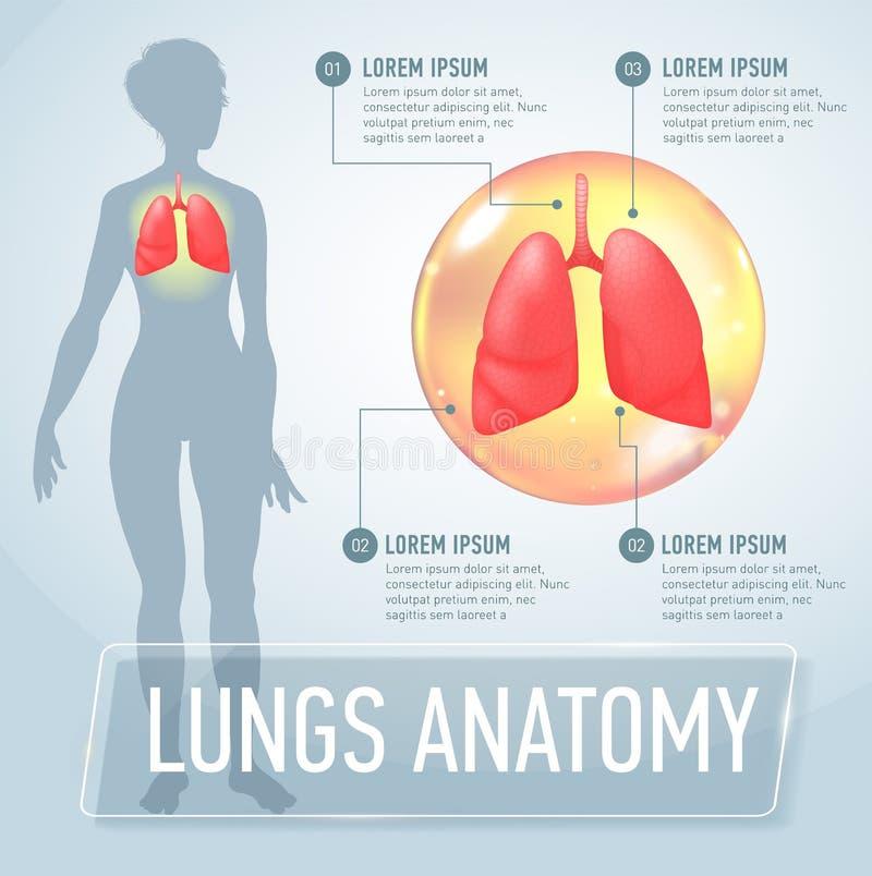 long Moderne medische infographics Interne organen in een vrouwelijk menselijk lichaam Anatomie van mensen vector illustratie