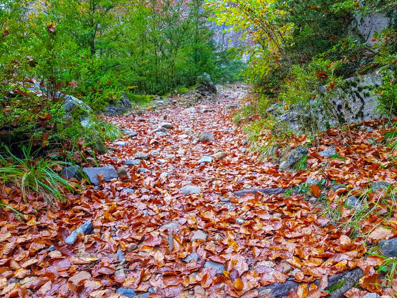 Long narrow background autumn leaves / yellow fallen autumn leaves, background texture of fallen leaves. Scene, scenic, orange, foliage, concept, forest stock images
