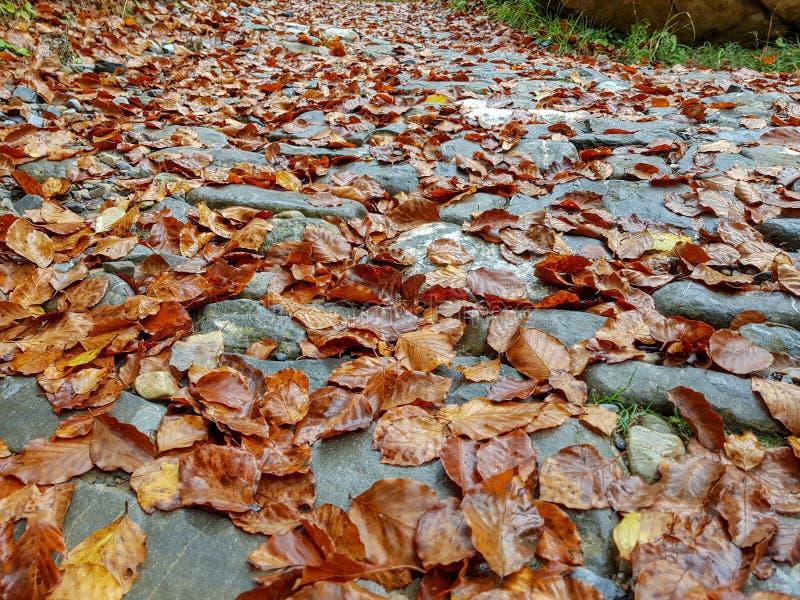 Long narrow background autumn leaves / yellow fallen autumn leaves, background texture of fallen leaves. Scene, scenic, orange, foliage, concept, forest stock photo