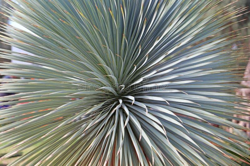 Long narrow, long leaves of bush royalty free stock photos