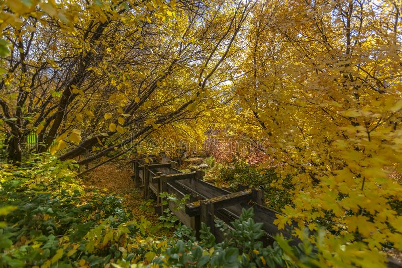 A long and narrow wooden flume in the middle of lush trees with vibrant leaves royalty free stock photos