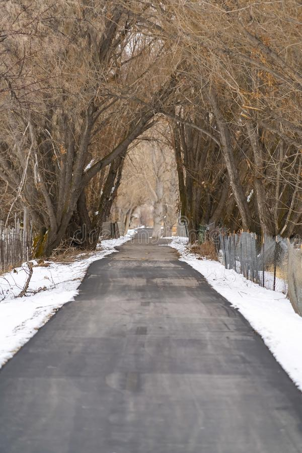Long paved road under a canopy of towering leafless trees in winter. Fresh powdery snow covered the ground on both sides of the road stock photography