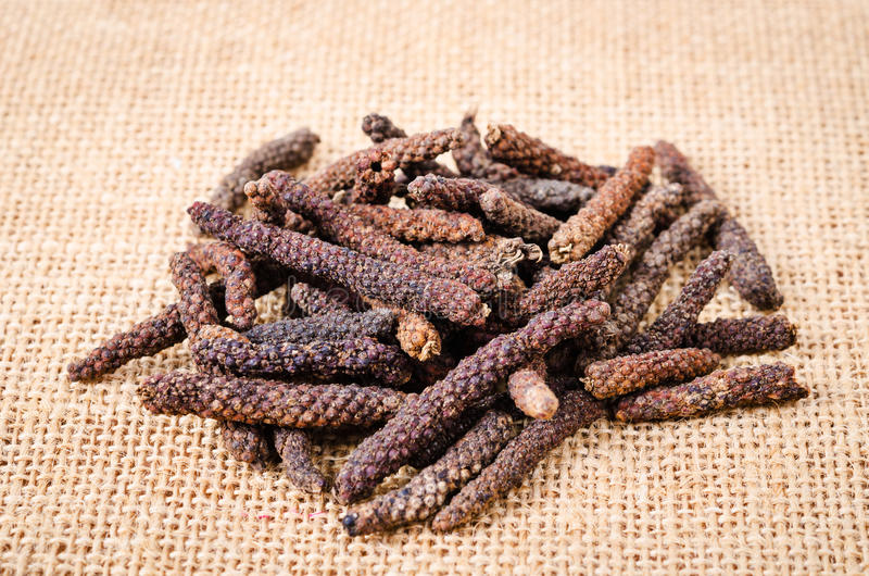 Long pepper or Piper longum. Long pepper or Piper longum on sack background royalty free stock images