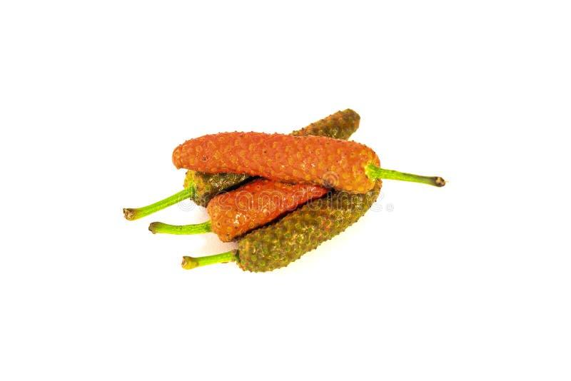 Long poivre indien image stock