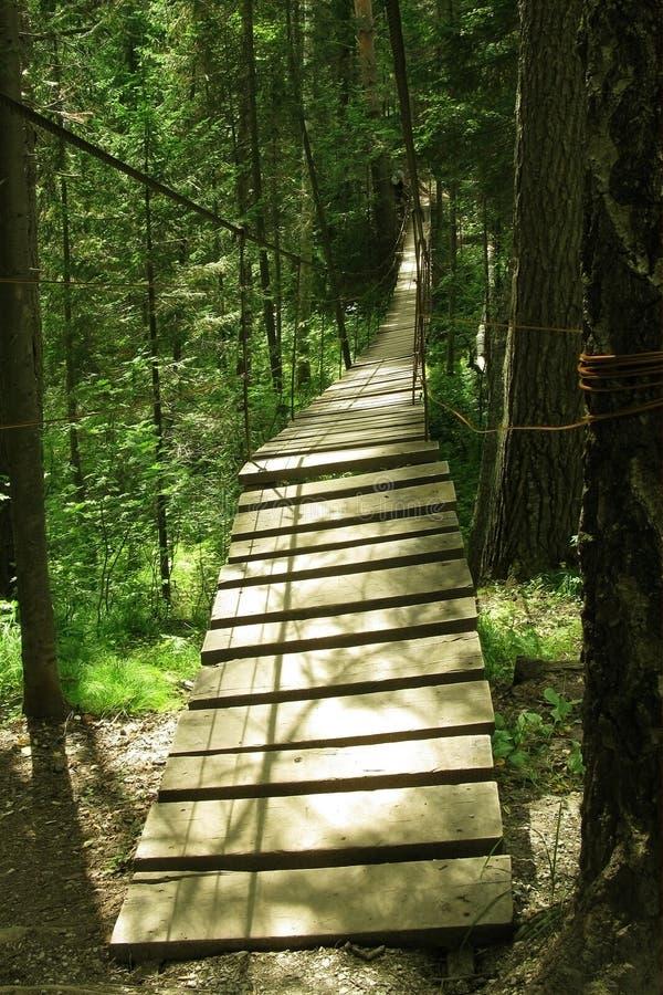 Long pont suspendu en bois dans la forêt croisant le ravin personne image stock