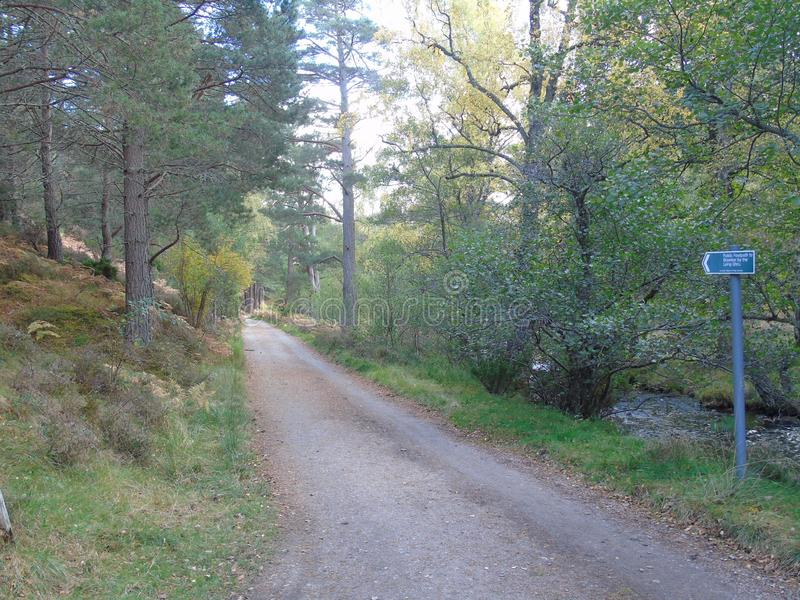 Long public road leads into the woods of different coloured green near Aviemore. stock image