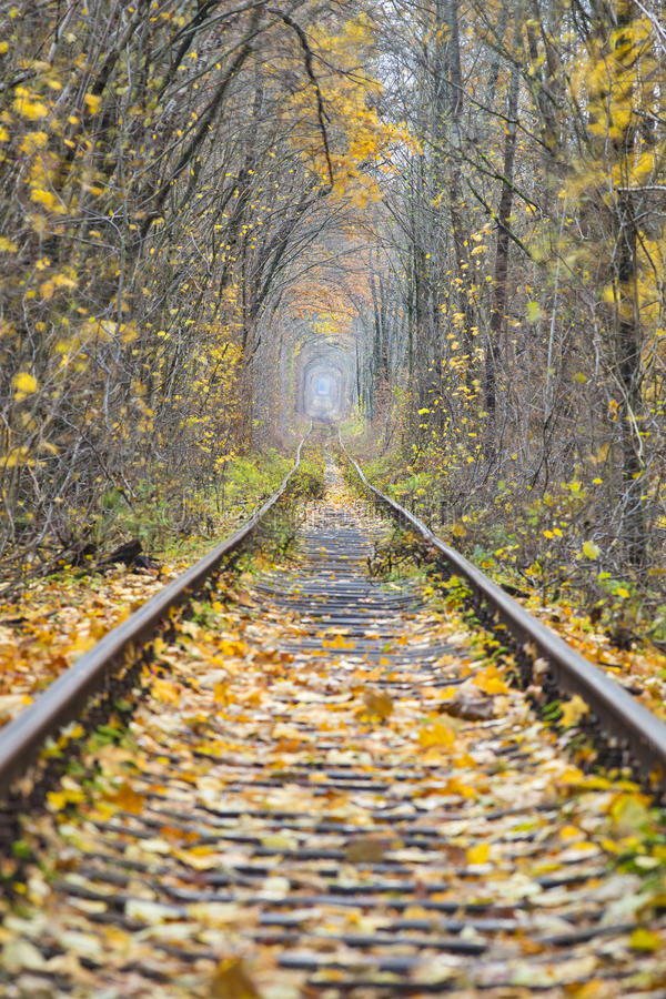 Long rail way in forest royalty free stock photo