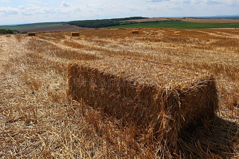 Long rectangular hay bale placed on harvested wheat field, other bales an green fields in background, light clouds on blue skies. Summer sunshine stock photography