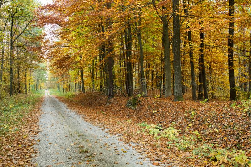 Road through an autumn forest. The long road through the autumnal forest stock photography