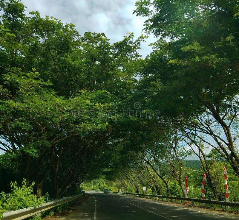 Long Road To Geurutee. Lhok Kruet, Long Road to Geurutee Mountain with the view of tall trees, it`s the beautiful place to traveling, Lamno, Aceh Jaya, Aceh stock image