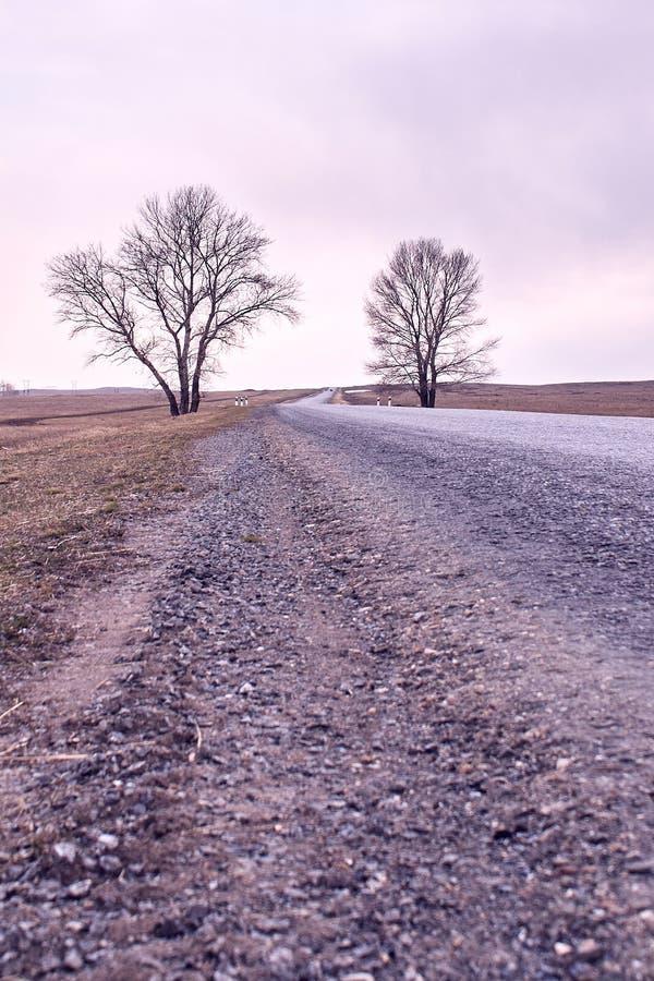 Long road. Trees on roadside. Gray light sky. long road stock photography