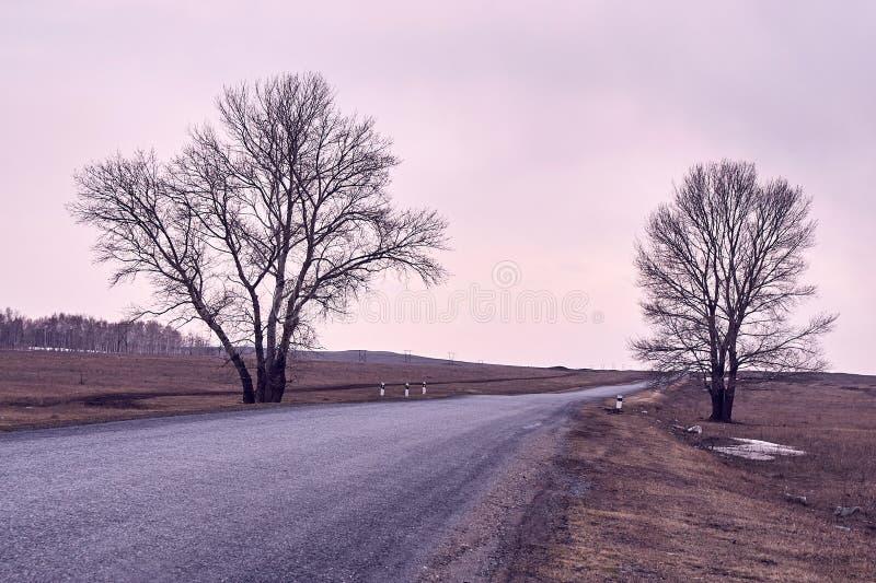 Long road. Trees on roadside. Beautiful view. Gray road. Gray sky stock photo