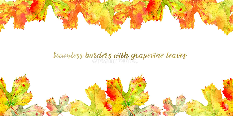 Long seamless border frame of fall grape vine leaves. Autumn foliage isolated on white background. Realistic watercolor. Seamless frame of fall grapevine leaves vector illustration