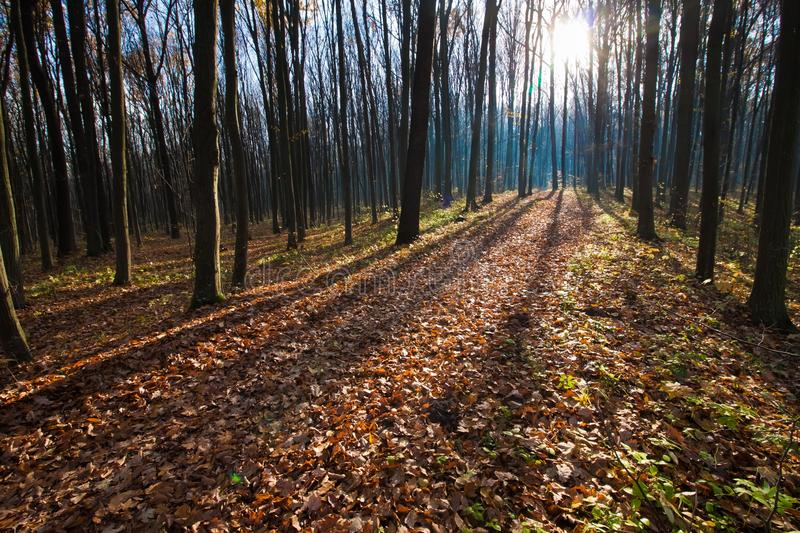 Long shadows in first sun rays getting through tree branches, bicycle pathway track covered with fallen leaves on a beautiful dawn. Long shadows in first sun royalty free stock photos