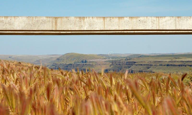 Download Long Span Concrete Beam stock photo. Image of view, horizontal - 11695956