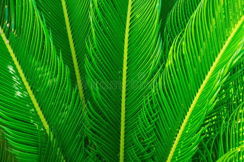 Long spiky palm tree leaves in beautiful geometrical pattern, botanical, foliage, tropical background. Text ready, copy space royalty free stock images