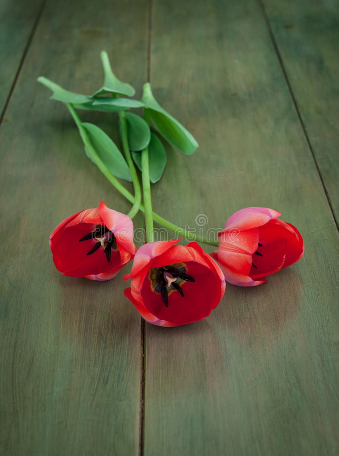 Long Stemmed Red Tulips On Green Wood Royalty Free Stock Photo
