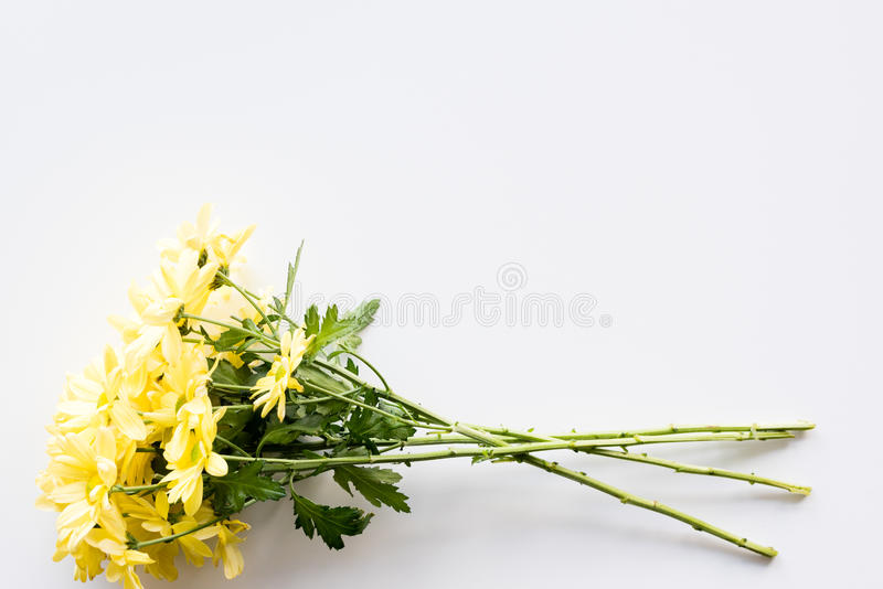 Long stemmed yellow daisies stock images
