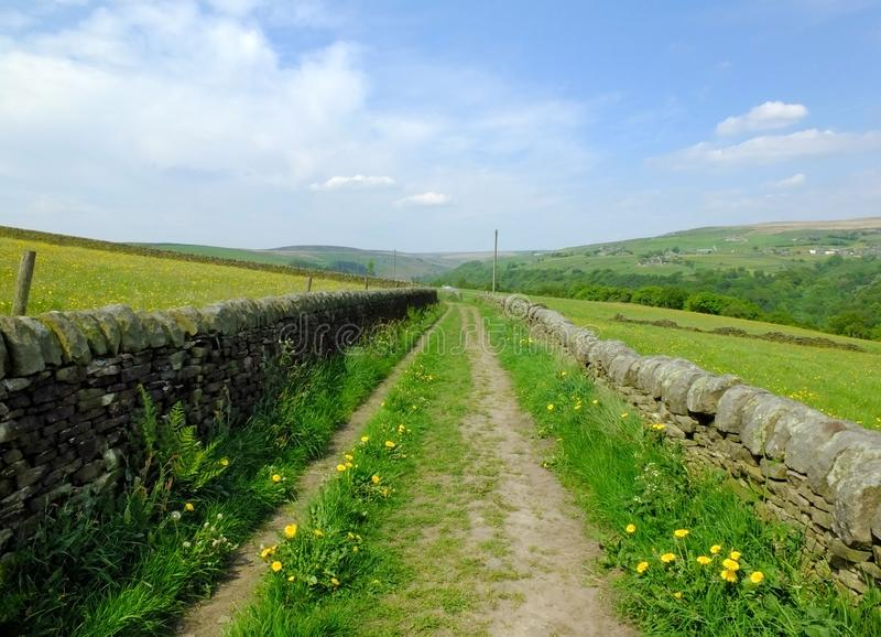 Long straight country lane with dry stone walls surrounded by green pasture with wildflowers in beautiful early summer sunlight stock photo