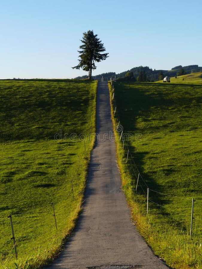 Long straight country lane through lush fields royalty free stock photos