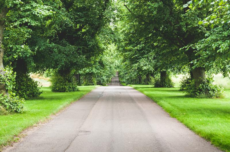 Long straight country road lined with trees, straight road with no cars leading to horizon royalty free stock images