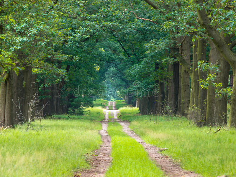 Download Long straight forest lane stock image. Image of peaceful - 23861385