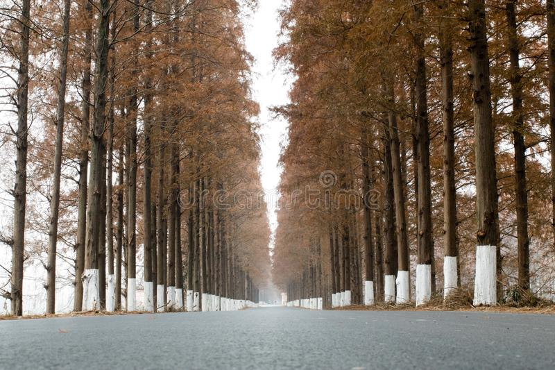 Long straight road in winter royalty free stock photos