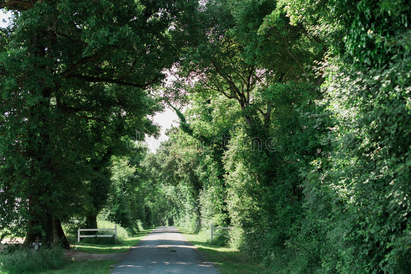 Long street lined with large green trees stock photo