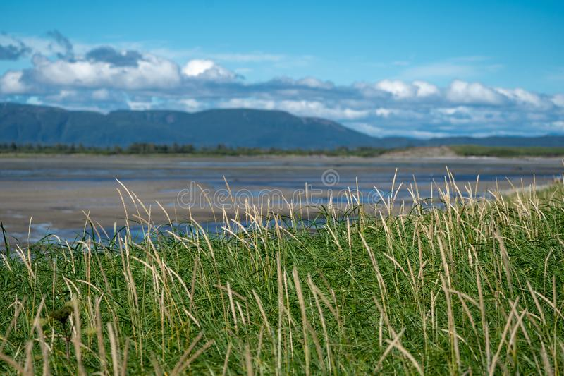 Long tall grass in foreground of Katmai National Park in Alaska. royalty free stock photography