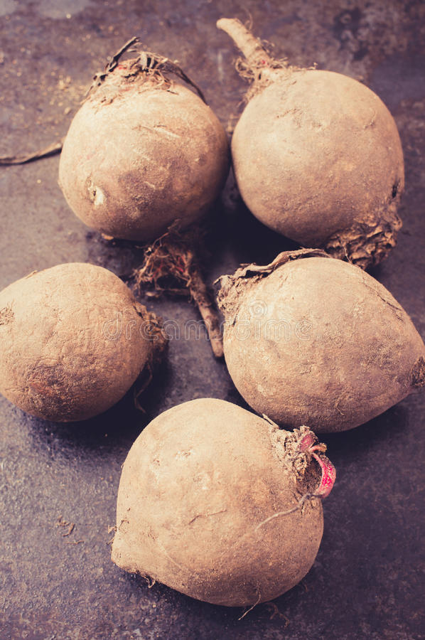 Long-term storage of beet. Dirty beet roots. Concept beet long-term storage royalty free stock images