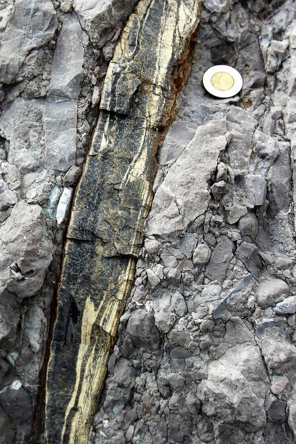 Long, thin chert nodule, black swirled with off-white stripes, embedded in light-gray limestone conglomerate stock photo